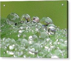 Morning Drops Acrylic Print by Kim Tran