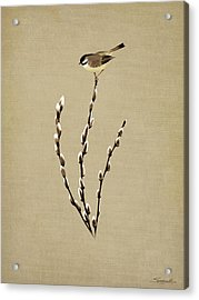 Pussy Willow And Chickadee Acrylic Print