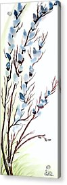 Pussy Willows In Spring Acrylic Print