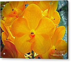 Put On A Happy Face Yellow Orchids Acrylic Print by Sue Melvin