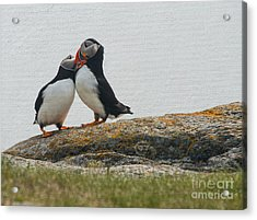 Put You're Head On My Shoulder Acrylic Print by Jim  Hatch