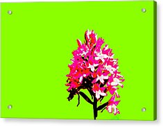 Green Pyramid Orchid Acrylic Print by Richard Patmore