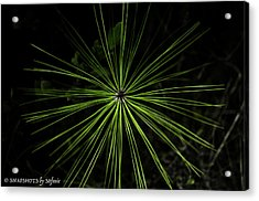 Pyrotechnics Or Pine Needles Acrylic Print