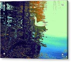 Quack Acrylic Print by Nancy Kane Chapman