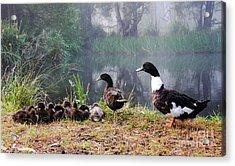 Quack Quack Ducks And A Pond Acrylic Print