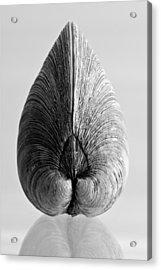 Quahog Number 1 Acrylic Print by Henry Krauzyk