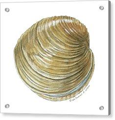 Quahog Shell Acrylic Print