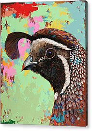Acrylic Print featuring the painting Quail by David Palmer