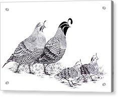 Quail Family Evening Stroll Acrylic Print