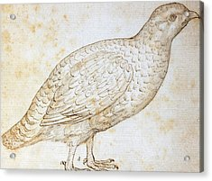 Quail Acrylic Print by Leonardo da Vinci