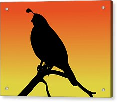 Quail Silhouette At Sunset Acrylic Print