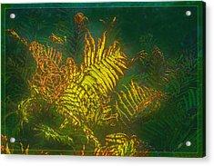 Quantum Fern.... Acrylic Print