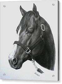 Quarter Horse Portrait Acrylic Print