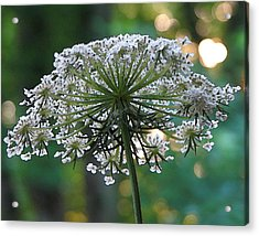 Queen Anne In Her Glory Acrylic Print by Ginger Howland