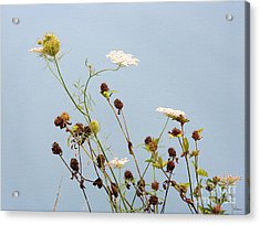 Queen Anne's Lace And Dried Clovers Acrylic Print