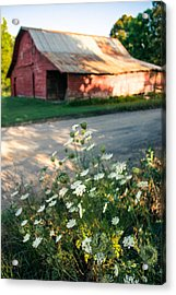 Queen Anne's Lace By The Barn Acrylic Print