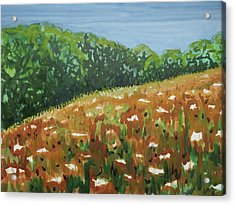 Queen Anne's Lace Field Acrylic Print by Bethany Lee