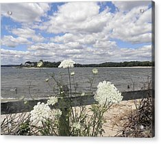 Queen Annes Lace Acrylic Print by Kate Gallagher