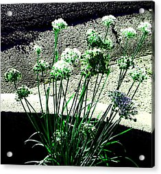 Acrylic Print featuring the photograph Queen Anne's Lace by Lenore Senior