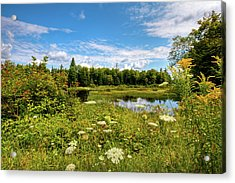 Acrylic Print featuring the photograph Queen Anne's Lace On The Moose River by David Patterson