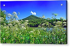 Queen Anne's Lace, Peaks Of Otter  Acrylic Print