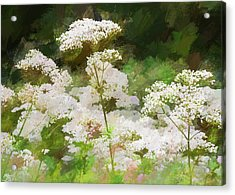 Acrylic Print featuring the photograph Queen Annes Lace. by Rob Huntley
