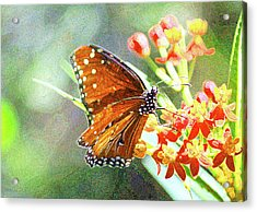 Queen Butterfly Acrylic Print by Inspirational Photo Creations Audrey Woods