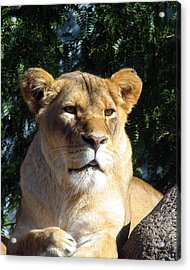Queen Of The Beasts Acrylic Print