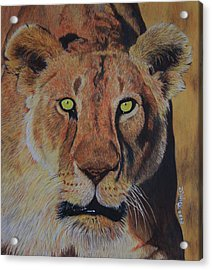 Queen Of The Jungle Acrylic Print by Don MacCarthy