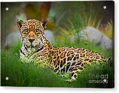 Queen Of The Jungle Acrylic Print
