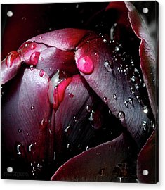 Queen Of The Night Cries In Joy Acrylic Print