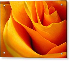 Queen Rose Acrylic Print