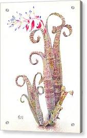 Quesnelia Marmorata Tim Plowman Acrylic Print