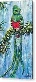 Quetzal Acrylic Print by Gail Butler