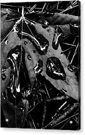 Quick Silver Acrylic Print by Tony Marquez