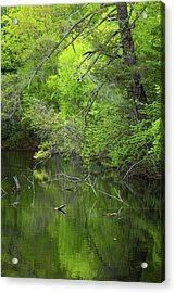 Quiet And Still Acrylic Print by Karol Livote