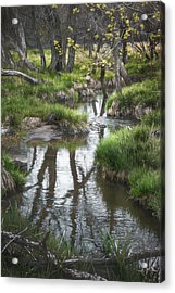 Quiet Stream Acrylic Print by Scott Norris