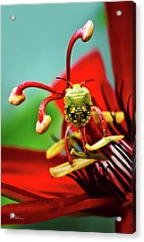 Quilt On My Back Acrylic Print