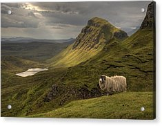 Quiraing Sheep Acrylic Print