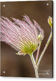 Quirky Red Squiggly Flower 1 Acrylic Print