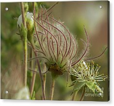 Quirky Red Squiggly Flower 2 Acrylic Print
