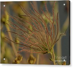 Quirky Red Squiggly Flower 4 Acrylic Print