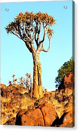 Acrylic Print featuring the photograph Quiver Tree by Riana Van Staden