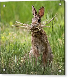 Rabbit Collector Square Acrylic Print by Terry DeLuco