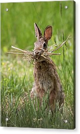 Rabbit Collector  Acrylic Print by Terry DeLuco