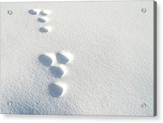 Rabbit Footprints In The Snow 2 Acrylic Print by Jack Dagley
