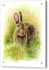Rabbit In Tall Grass Acrylic Print by Phyllis Tarlow