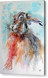 Rabbit Acrylic Print by Kovacs Anna Brigitta