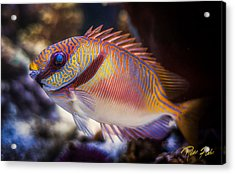 Rabbitfish Acrylic Print