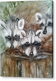 Raccoon Babies By Christine Lites Acrylic Print by Allen Sheffield